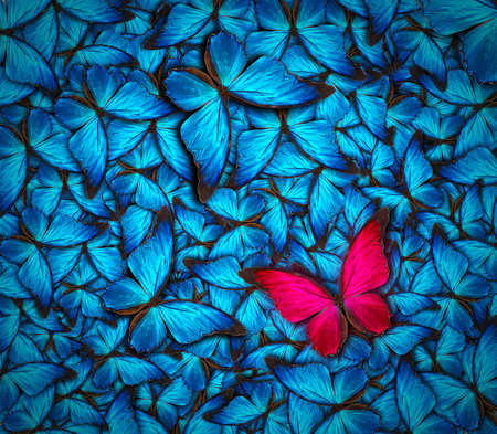 Photo pour beautiful background with lot of different butterflys - image libre de droit