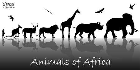 Illustration for Silhouettes of animals of Africa: meerkat, kangaroo, kudu antelope, lion, giraffe, rhino, elephant and birds with reflections background. Vector illustration - Royalty Free Image