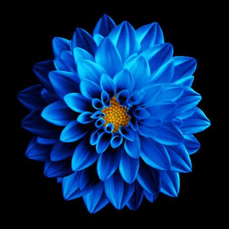 Photo pour Surreal dark blue flower dahlia macro isolated on black - image libre de droit
