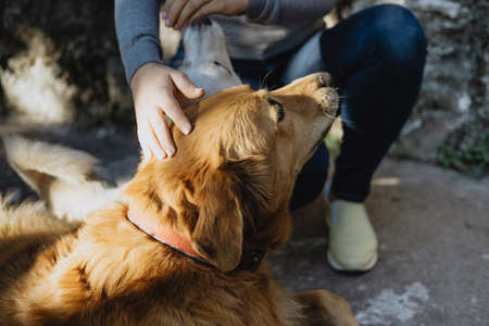 Closeup redhead dog with  woman stroking her