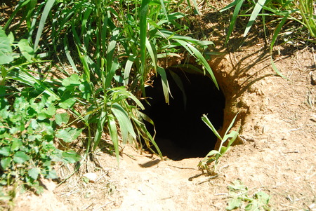 Rabbit animal hole dug in the ground for hiding