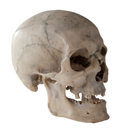 Photo pour Anatomical  real human skull, closeup. Angle view three quarters. Isolated on white background and clipping path. - image libre de droit