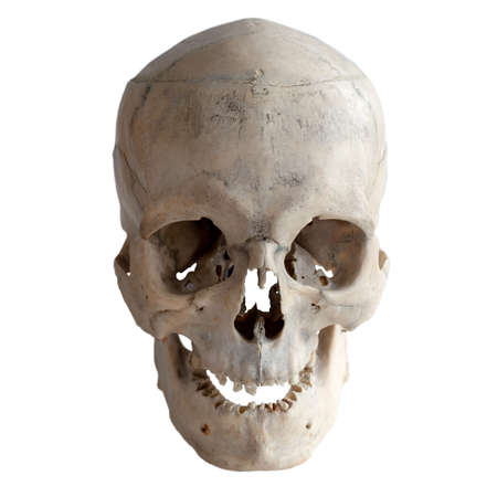 Photo pour Anatomical  real human skull, closeup. Front view. Isolated on white background and clipping path. - image libre de droit