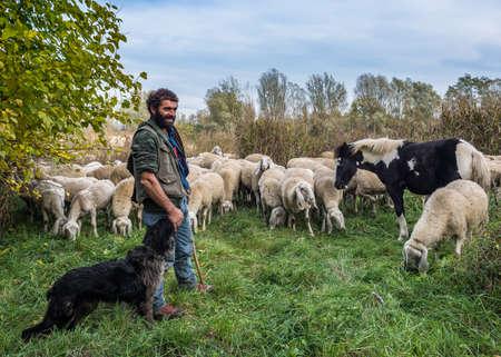 Foto de Reportage of Sheep-farming in the Bergamasca plain. Brambilla Simone Live News - Imagen libre de derechos
