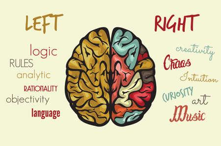 Illustration pour Brain function - image libre de droit