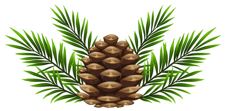 Illustration pour Pinecone with pine leaves on white background illustration - image libre de droit