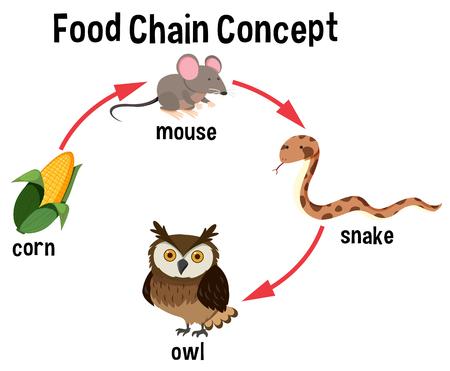 Ilustración de Food Chain concept diagram illustration - Imagen libre de derechos