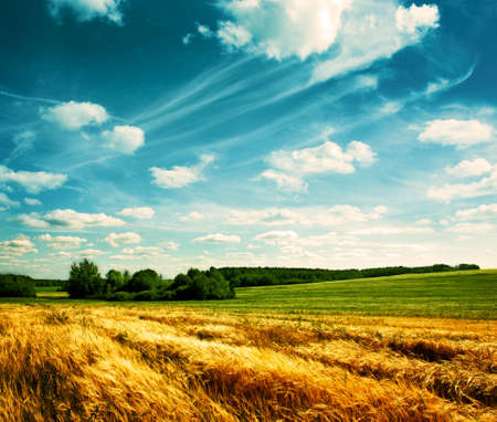 Photo pour Village Wheat Field on the Background of Beautiful Clouds - image libre de droit