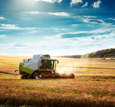 Photo for Working Harvesting Combine in the Field of Wheat - Royalty Free Image