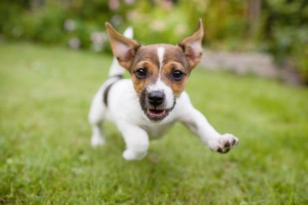 Foto de Happy Dog - Imagen libre de derechos