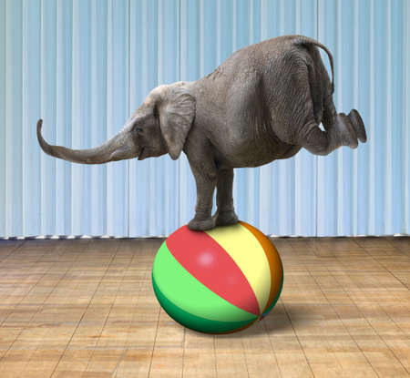 Photo pour Elephant balancing on a colorful ball, with indoor stage background - image libre de droit
