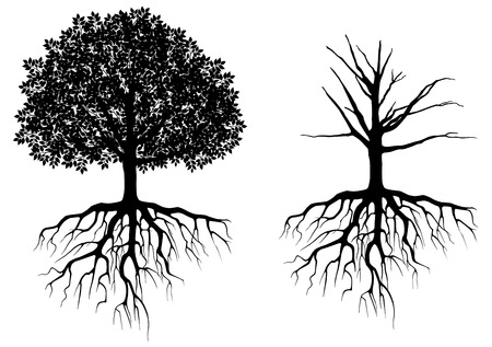 Foto de Tree with roots isolated on white. Vector illustration - Imagen libre de derechos