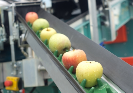 Photo for Picked apples on a conveyor belt - Royalty Free Image