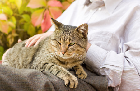 Foto de Tabby cat enjoying cuddling in old man's lap - Imagen libre de derechos
