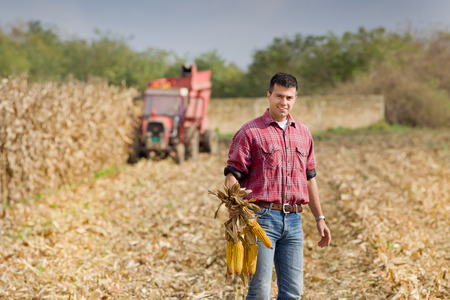 Photo pour Young farmer standing on field during harvest and showing corn cobs - image libre de droit