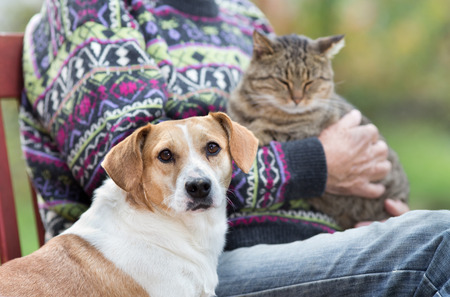 Close up of cute dog standing on bench next to his owner who holding cat in the lap