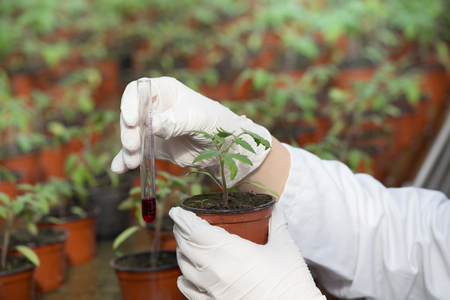 Foto de Biologist holding flower pot with sprout and test tube with chemicals in greenhouse. Plant protection and biotechnology concept - Imagen libre de derechos