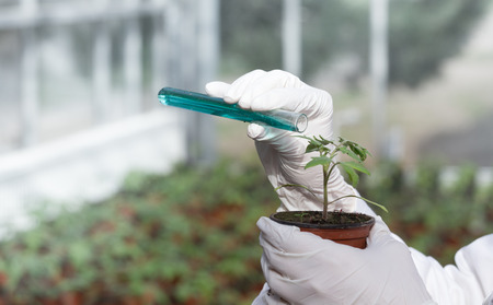 Foto de Close up of biologist's hands with gloves pouring liquid chemicals in flower pot with sprout in greenhouse. Plant protection and biotechnology concept - Imagen libre de derechos