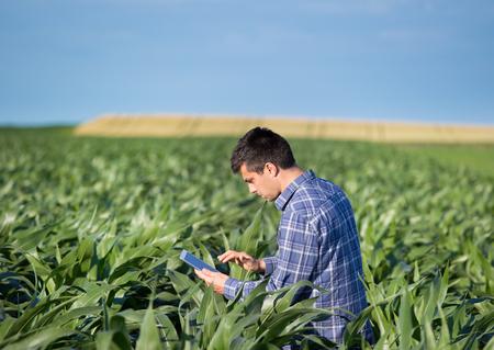 Foto de Young handsome agriculture engineer standing in corn field with tablet in early summer - Imagen libre de derechos