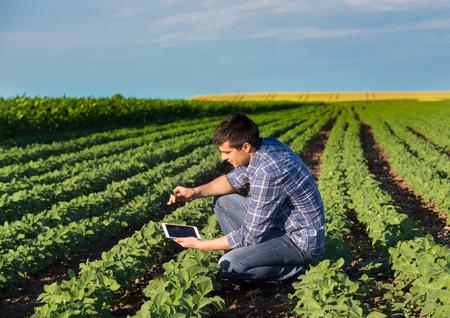 Foto de Young handsome agriculture engineer squatting in soybean field with tablet in hands in early summer - Imagen libre de derechos