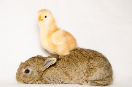 Foto per Portrait of funny animals - Immagine Royalty Free