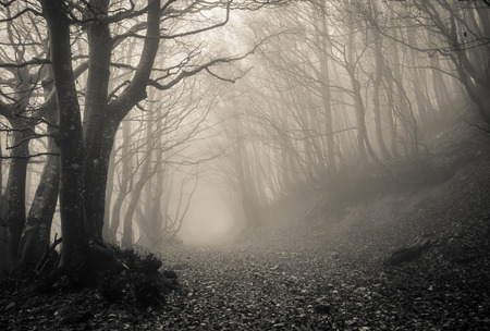 Photo for Path on the gothic forest - Royalty Free Image