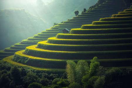Foto de Vietnam Rice fields on terraced in rainy season at Mu cang chai, Vietnam. Rice fields prepare for transplant at Northwest Vietnam - Imagen libre de derechos