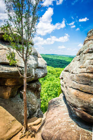 Foto de A weathered tree is surrounded by sandstone rock formations and through a gap can be seen the Shawnee National Forest - Imagen libre de derechos