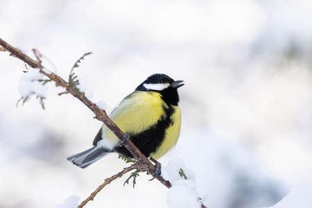 Photo pour tit sitting on a branch in winter Park snow - image libre de droit
