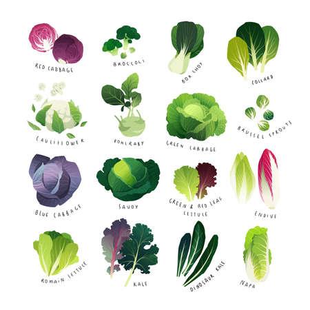 Illustration pour Clip art cabbage collection vector illustration - image libre de droit