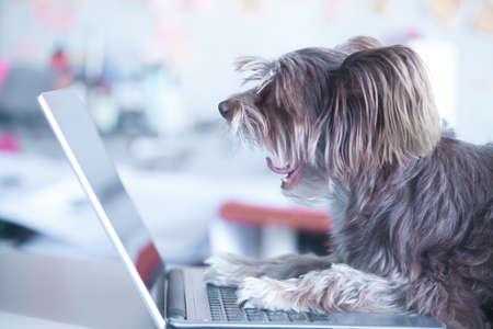 Foto de Funny dog works at the laptop. Pet using computer - Imagen libre de derechos