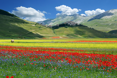 Photo pour Blossoming time in a wonderful Italian valley - image libre de droit
