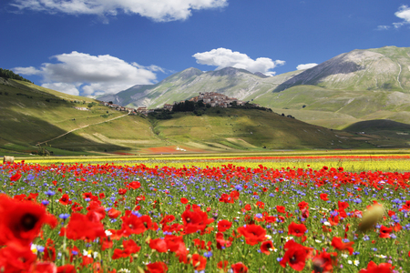 Photo for Blossoming time in a wonderful Italian valley - Royalty Free Image