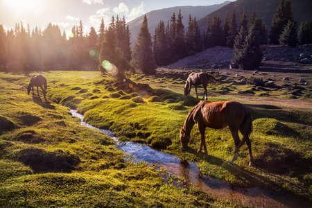 Photo pour Horses in the Gregory gorge mountains of Kyrgyzstan, Central Asia - image libre de droit