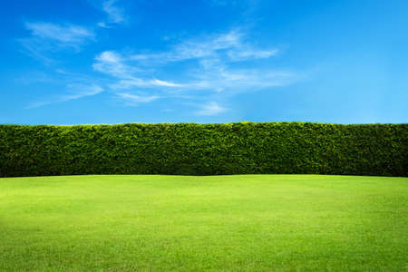Photo for Green leaves wall background - Royalty Free Image