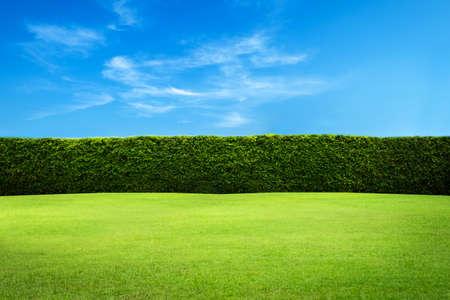 Foto de Green leaves wall background - Imagen libre de derechos