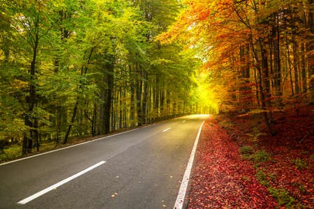 Foto de Autumn forest scenery with rays of warm light illuminating the gold foliage.concept of two seasons in - Imagen libre de derechos