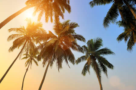 Photo for Beautiful tropical sunset with palm trees at beach - Royalty Free Image