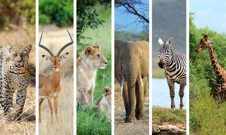 Photo pour Collage with photo african animals - image libre de droit