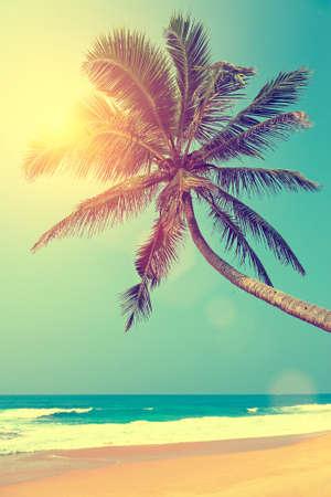Foto de Tropical beach with palm in Sri Lanka - Imagen libre de derechos