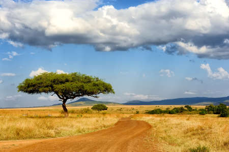 Photo pour Beautiful landscape with tree in Africa - image libre de droit