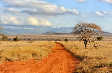 Foto de Beautiful landscape with tree in Africa - Imagen libre de derechos