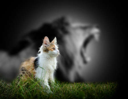 Photo for Small cat with big angry male lion shadow - Royalty Free Image