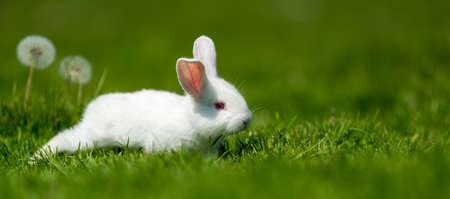 Foto de Little white rabbit on green grass in summer day - Imagen libre de derechos