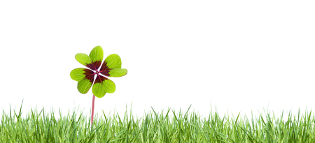 Photo for four-leaved clover in green meadow - Royalty Free Image