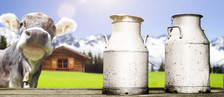 Photo pour cow with milk cans - image libre de droit