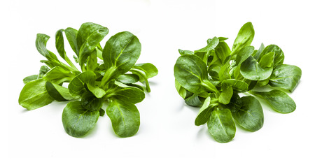 Photo for Green Salad isolated - Royalty Free Image