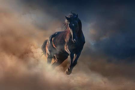 Photo pour Beautiful black stallion run in desert dust against sunset sky - image libre de droit
