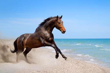 Foto de Beautiful horse run along the shore of the sea - Imagen libre de derechos