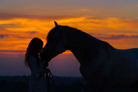 Photo for Beautiful horse with girl silhouette on sunset - Royalty Free Image